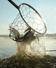 Catching crabs -         Repinned by Chesapeake College Adult Ed. We offer free classes on the Eastern Shore of MD to help you earn your GED - H.S. Diploma or Learn English (ESL) .   For GED classes contact Danielle Thomas 410-829-6043 dthomas@chesapeke.edu  For ESL classes contact Karen Luceti - 410-443-1163  Kluceti@chesapeake.edu .  www.chesapeake.edu