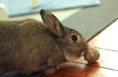 Logic Toys for Rabbits - My House Rabbit