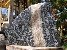 Orbicular granite  (also known as orbicular rock or orbiculite) is an uncommon plutonic rock type which is usually granitic in c...