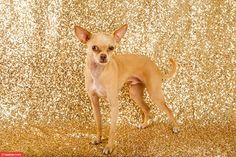 Tävlingen 'Världens fulaste hund' är avgjord. Här är årets underbara deltagare.