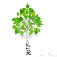 For a Birch tree tattoo on wrist. Birch trees represent new beginnings, rebirth, renewals, cleansings.