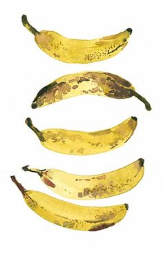 This watercolour painting of different angles of a banana has good black/brown markings and patches on some of the bananas. They are simple but effective splatters of the colour on top of the yellow to give them a more realistic look. Watercolor Fruit, Watercolour Painting, Watercolors, Food Illustrations, Illustration Art, Banana Art, Photocollage, Food Drawing, Fruit Art