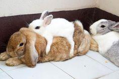 Comfy bun