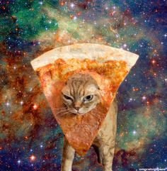 All New Cats in Space Will Have Everyone Laughing