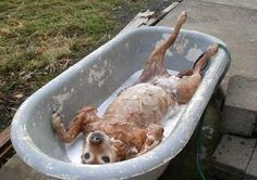 Some dogs just enjoy baths more than others.  #FeedStore for all animals.