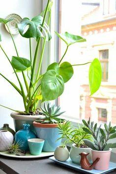 Kuvahaun tulos haulle window board for house plants