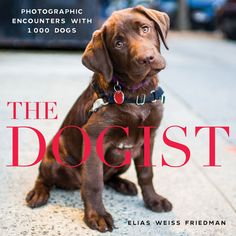 Meet the 'Dogist' and see the best dogs and puppies walking the streets of New York: