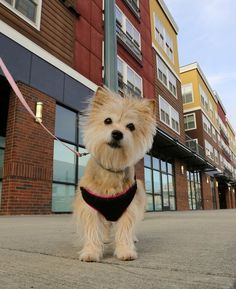 Is that your dog's poop? DNA testing shows apartment building owners whose pets are making messes. My story.