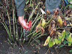 Que tailler et quand tailler au jardin : à l'approche de l'hiver Rustica vous guide.