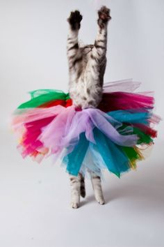 The only thing that kept Mittens from being a dance star was the lack of an obnoxious mom!