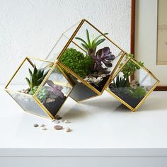 Shop terrarium from west elm. Find a wide selection of furniture and decor options that will suit your tastes, including a variety of terrarium. Terrarium Design, Glass Terrarium, Succulent Terrarium, Terrarium Plants, Terrarium Containers, Plant Pots, How To Make Terrariums, Cactus Pot, Decoration Plante