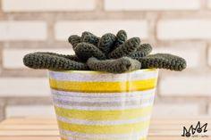 arMi-arMa: Cactusss!