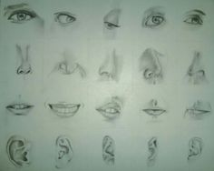 Study of facial features. Sophomore at IU