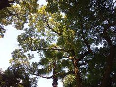 Kobe sannomiya east park