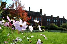 Our Autumnal flowers are still going strong in the garden. In the background you can see our Victorian family home, now offices, and the 1911 extension of the building.