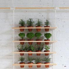 Mur végétal chez soi / faire un potager chez soi