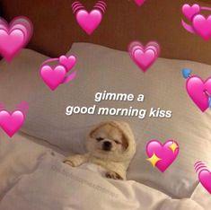 Today's Afternoon Mega Memes Memes Amor, Bf Memes, All Meme, Boyfriend Memes, Stupid Memes, Cute Cat Memes, Cute Love Memes, Pretty Meme, Good Morning Kisses