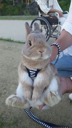 When you are searching for a furry companion which is not only adorable, but easy to keep, then look no further than a pet rabbit. The Animals, Cute Little Animals, Cute Funny Animals, Cute Dogs, Wild Animals, Jungle Animals, Cute Baby Bunnies, Funny Bunnies, Cute Babies