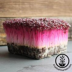 True Leaf Market has a huge selection of organic & conventional microgreens seeds. Find growing kits and supplies to get started. Bulk wholesale sizes available. Growing Microgreens, Hydroponic Growing, Growing Sprouts, Hydroponic Gardening, Growing Plants, Mountain Valley Seeds, Sprouting Seeds, Amaranthus, How To Grow Taller