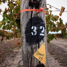 A child. St Jakobi Shiraz, planted by the Semmlers, made into wine by Wayne Dutschke, enjoyed by all on the recent Barossa Grounds tour.