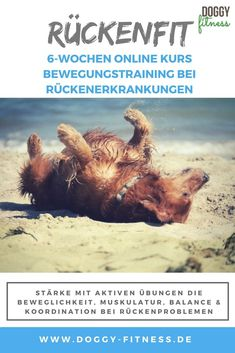 Dog Commands Training, Fitness, Stair Climbing, Spinal Disc Herniation, Toller Dog, Keep Fit