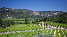 The Napa Valley Vintners Association. great web site to explore the many #NapaWineries and #CalistogaWineries of the valley and plan your excursions.