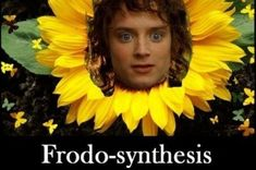 """50 """"Lord Of The Rings"""" Memes Guaranteed To Make You Laugh"""