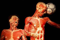 cadaver for the artist - Google Search