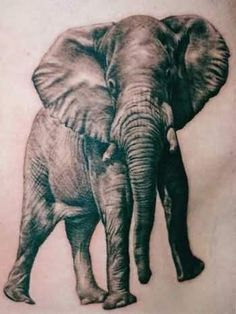Big Elephant Tattoo