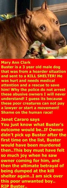 MURDERED 12/19/2017 ---  12/19/17 OWNER BACKED OUT ---  RTO 12-16-2017 --- Hello, my name is Buster . My animal id is #15862. I am a male red brown dog at the Manhattan Animal Care Center. The shelter thinks I am about 3 years old.  I came into the shelter as a stray on 11-Dec-2017. http://nycdogs.urgentpodr.org/buster-15862/