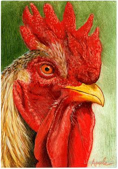 The Red Rooster - farm animal painting by LindaAppleArt Rooster Painting, Rooster Art, Red Rooster, Chicken Painting, Chicken Art, Farm Art, Chickens And Roosters, Pictures To Paint, Animal Paintings
