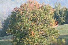 L'Oasi WWF dei Ghirardi occupa seicento ettari di prati, boschi e torrenti nell'alta Val Taro, sull'Appennino parmense. È la casa di innumerevoli specie di animali, piante e funghi; ospita habitat rarissimi e un paesaggio incantevole. E muta continuamente col passare delle stagioni. Muta, Bed And Breakfast, Country Roads, Painting, Portion Plate, Breakfast In Bed, Paintings, Draw, Drawings