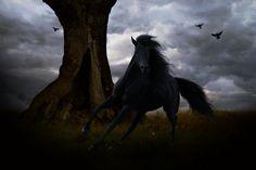 Wild Ebony by hp-fallenangel.deviantart.com on @deviantART - PLEASE KEEP DESCRIPTION