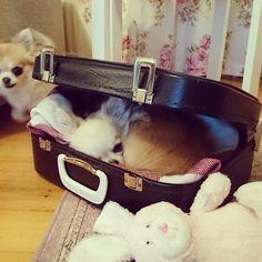 Belt, Dogs, Accessories, Fashion, Belts, Moda, Fashion Styles, Pet Dogs, Doggies