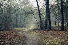 이미지 출처 http://images.forwallpaper.com/files/images/f/f56d/f56de09e/204368/fog-forest-road-trail-trees-autumn.jpg