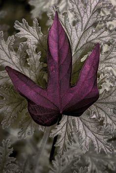 Leaf on Leaves by David Kelly on 500px