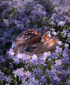 """The real life Bambi : A fawn resting in a field of flowers photo by Amanda Millet"" Aesthetic Art, Aesthetic Pictures, Spring Aesthetic, Aesthetic Women, Aesthetic Grunge, Aesthetic Vintage, Aesthetic Clothes, Bambi, Cute Baby Animals"