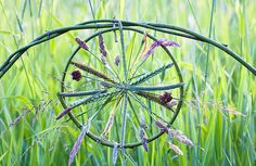 Experimental Grass Wheel - Richard Shiling