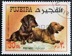 Fujeira - 1.980: Un sello impreso en Fujeira dedicada a los perros, muestra de pelo duro y perros salchicha.
