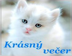 Are Cats Ticklish? [If So Where Is the Place That Makes the Cat Ticklish - Birman Cat - Ideas of Birman Cat - Are Cats Ticklish? so cute cats The post Are Cats Ticklish? [If So Where Is the Place That Makes the Cat Ticklish appeared first on Cat Gig. Cute Kittens, Kittens And Puppies, Ragdoll Kittens, Tabby Cats, Bengal Cats, Pretty Cats, Beautiful Cats, Animals Beautiful, Pretty Kitty