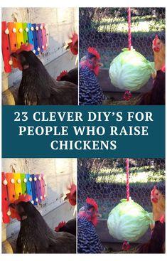 Diy Chicken Toys, Cute Chicken Coops, Chicken Coop Decor, Chicken Barn, Chicken Coop Run, Chicken Coop Designs, Backyard Chicken Coops, Chicken Runs, Chickens Backyard