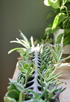 chicken feeder for succulents
