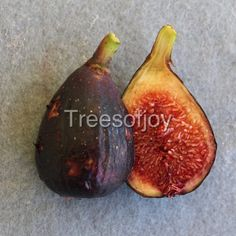 We have a large collection of Fig tree varieties and and different fruit trees, such as Jujube, Pawpaw, Persimmon, kiwis. We also carry the rare Cedar of Lebanon trees. Fruit Trees, Trees To Plant, Different Fruits, Fig Tree, Garden Trees, Vacation Destinations, Muse, Plants, France