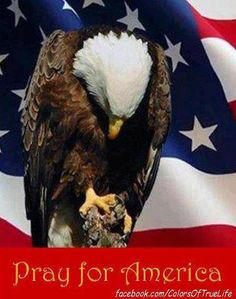 Pray for America. America needs to return to God and live by His principles.  In God We Trust.