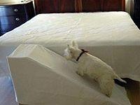 Scamp Ramp Large - Foam Dog Ramp