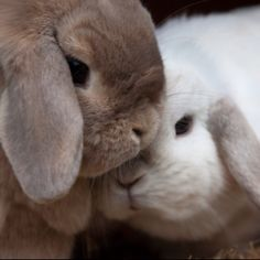 In case you are searching for a furry companion that is not just adorable, but simple to keep, then look no further than a family pet bunny. Cute Baby Bunnies, Funny Bunnies, Cute Baby Animals, Animals And Pets, Funny Animals, Cute Babies, Cosmetic Animal Testing, Fluffy Bunny, House Rabbit
