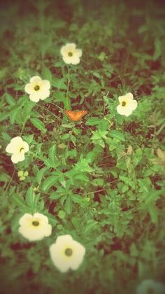 #flores e borboleta #flower and butterfly