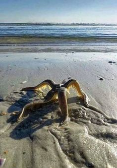 Image result for starfish walking on land