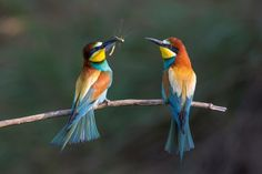 ZSL animal photography prize 2015 - in pictures | Environment | The Guardian