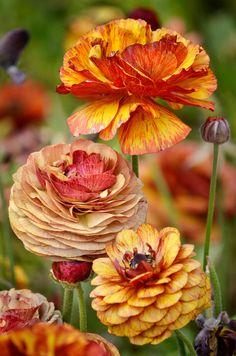 fall colors (by Ion Moe - rosebriar)